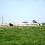 Помещения для скота в Белосельском